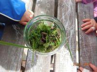 Eine Draufsicht eines Glases voller Gras