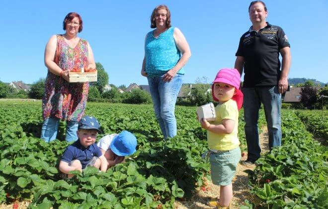 Erwachsene und Kinder beim Erdbeeren pflücken